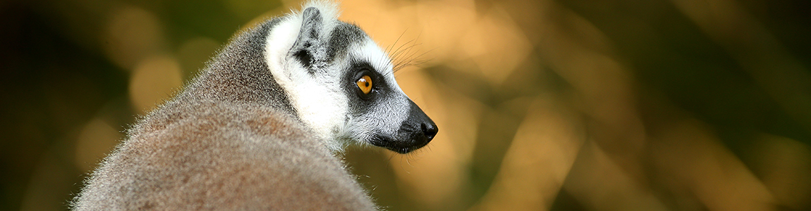 Duke University Lemur Center Tours