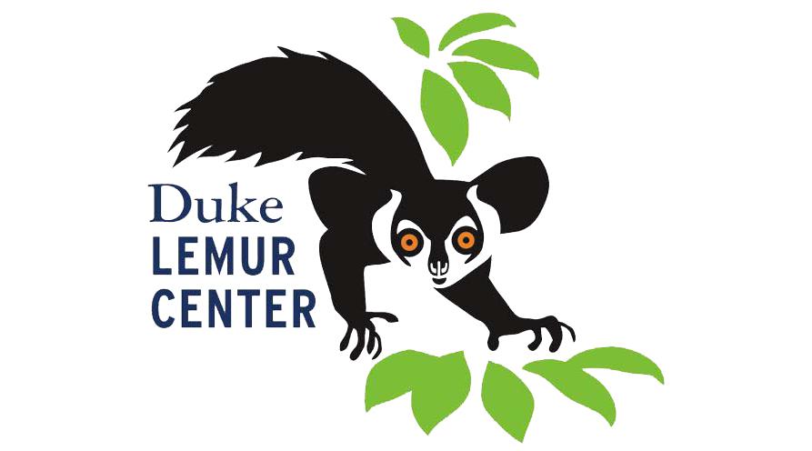 Lemurs Live Open Format Tour